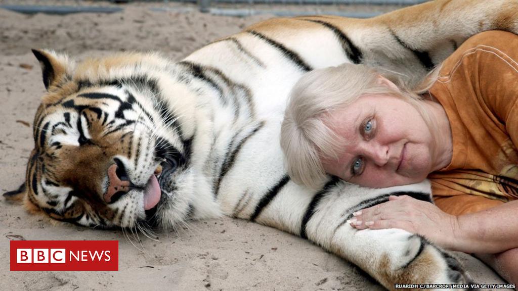 101978855 tigers getty976 - Big cat spat