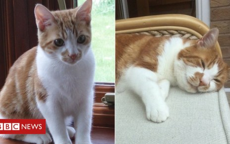 102173268 fa6ec355 ea3a 4f04 9cd0 f48eeead5707 - Lost cat reunited with owner after 10 years