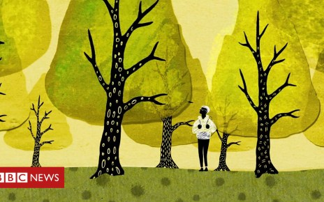 102241444 p06c96g3 - How trees secretly talk to each other