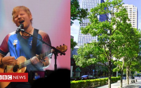 102247685 befunky collage - Trees force Ed Sheeran to move two shows in Germany