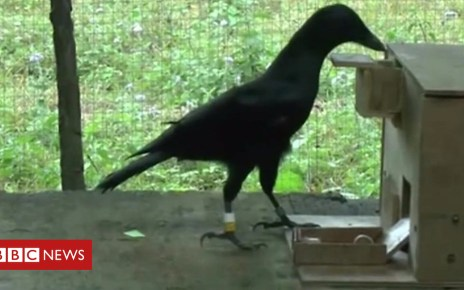 102248124 p06cbncj - How crows can use a vending machine