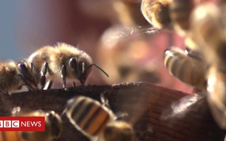 102814158 p06ghv4j - Bees living on top of a London mosque