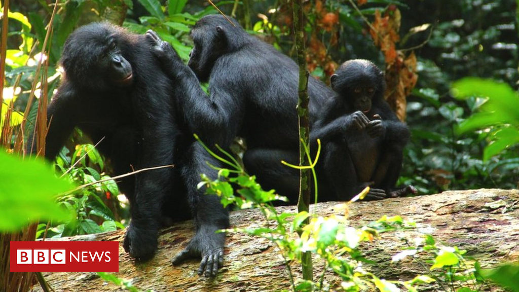 102880698 img 1906 - Primate speech: How some species are 'wired' for talk