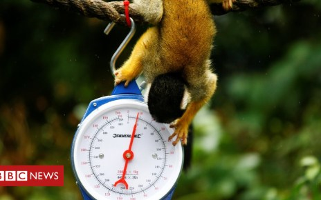 103164803 hi048806744 - ICYMI: Zoo's weigh-in and a greasy pole
