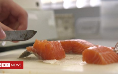 91096451 salmon - Trial to test if GM fed salmon are more nutritious