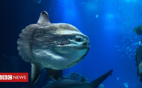 103263785 gettyimages 861593182 - Tropical sunfish spotted in Highland waters