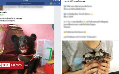 103363240 traffic1 - Facebook animal trade exposed in Thailand