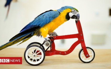 103463185 gettyimages 480146543 - Google bans birds on bikes from algorithm contest