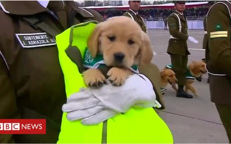 103521157 p06lq01t - Puppies in Chile military parade