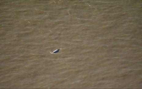 p06m6390 - Thames whale: Watch for Benny the beluga continues