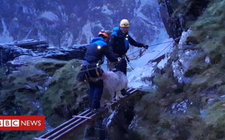 103646206 sheep - 'Epic rescue' for sheep stranded on Lake District cliff