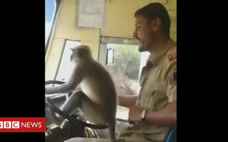 103749226 1dc71356 fbb5 4c4b a048 c1ad6d683ca3 - Video shows monkey 'driving' bus in Karnataka, India