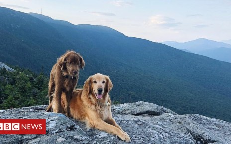 103845421 3d0605ba fd5c 4a6a bf9a 3a7df663eaa0 - Bucket list for Finn, the Vermont dog dying of cancer