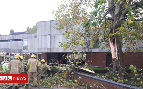 103868946 tree - Woman crushed by falling tree in Market Drayton