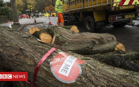 97279696 pa 29202047 - Sheffield tree felling: More saved after deal brokered
