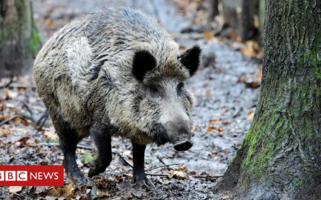 104178509 gettyimages 893197564 - Berlin pensioner caught hunting forest boar with an axe