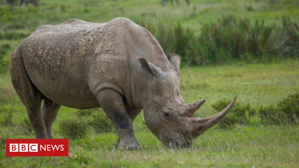104301094 gettyimages 534934638 - China postpones lifting ban on rhino and tiger parts after outcry