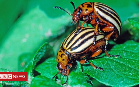 104324064 gettyimages 883312168 - Climate change: Heatwaves 'halve' male insect fertility