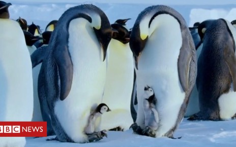 104401067 p06s75s6 - Attenborough agreed with decision to save penguins' lives