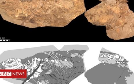 104632035 mediaitem104632034 - Fossil preserves 'sea monster' blubber and skin