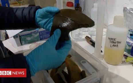 104694024 p06tz0kt - Work to conserve HMS Invincible shipwreck artefacts