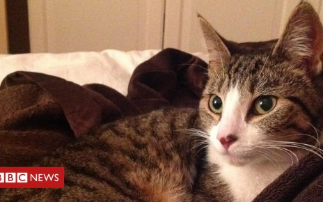 105016269 roxy1 - Cat missing for five years reunited with 'elated' family