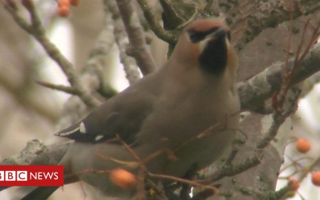 105068279 p06x7hsz - Winter birds thrill Norfolk wildlife photographers