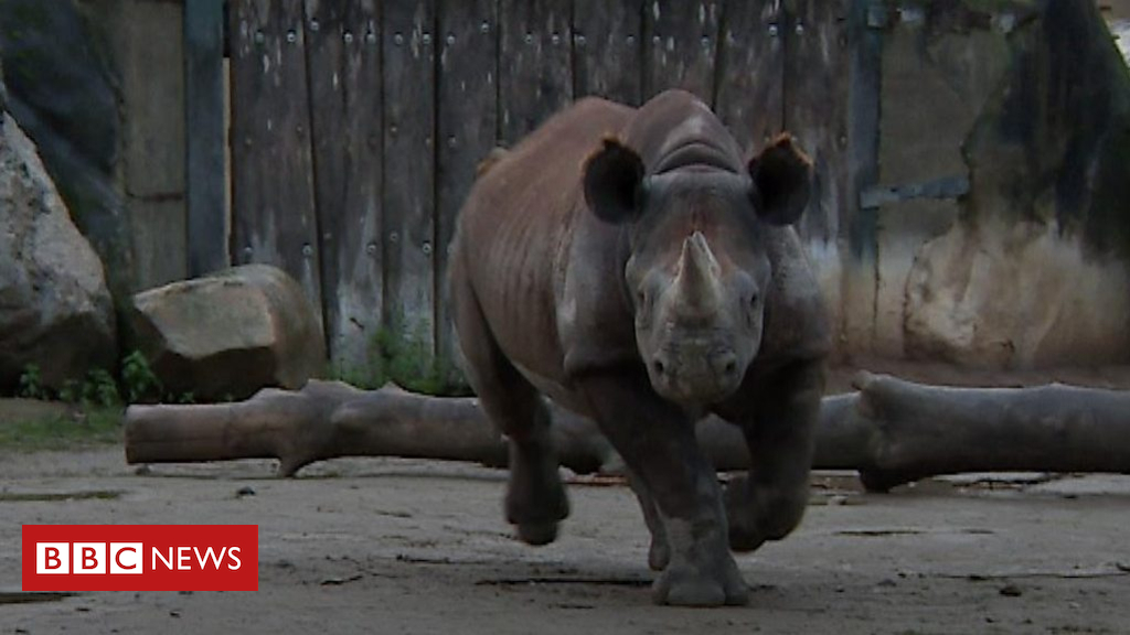 105241118 p06yh0t2 - How do you transport a rhino from Germany to the UK?