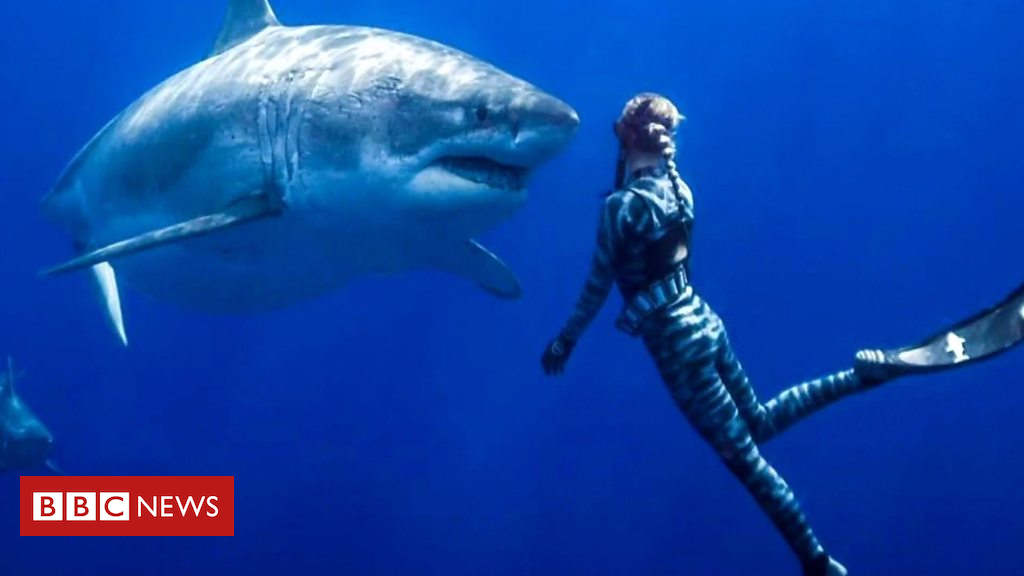 105245711 p06yj95p - Swimming with biggest great white shark on record