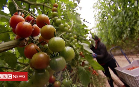105422391 p06zm9gs - Tomato prices 'may rise 10%' if there is a no-deal Brexit