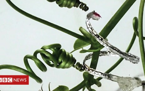 105421453 p06zlxsm - The robot tendrils that mimic plants, and other tech news