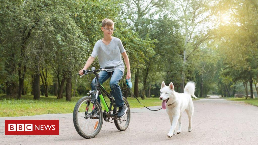 105600341 walkingdog - Helping teenagers beat the blues