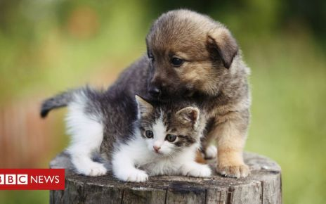 105690329 gettyimages 625239234 - Puppy and kitten pet shop sales could be banned in Wales