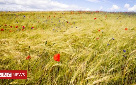 105737466 gettyimages 1130747470 - UN: Growing threat to food from decline in biodiversity