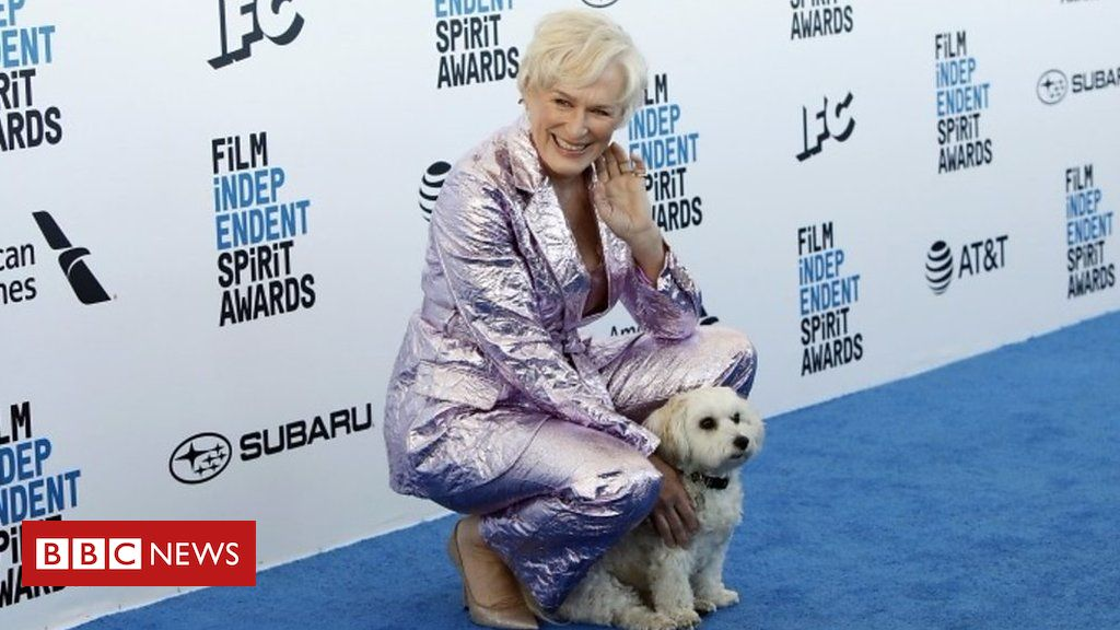 105768842 p071tg85 - Glenn Close's Spirit Award doggy date