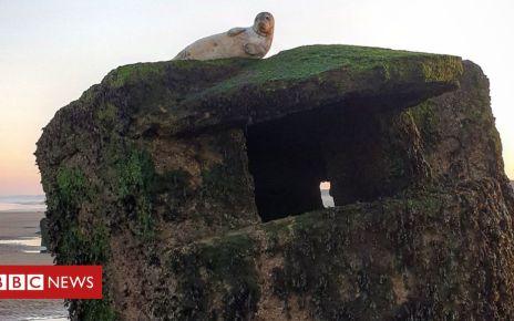 105855903 img 20190226 234851 830 - Stuck seal on Fraisthorpe beach saved from lofty ledge