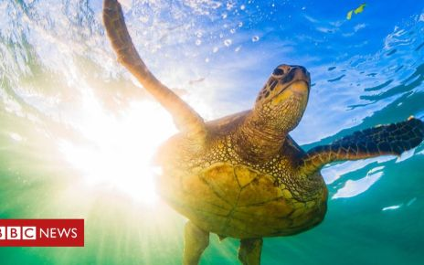 106255499 gettyimages 890377660 - Blue Planet: Executive producer defends sea turtle hatchling release