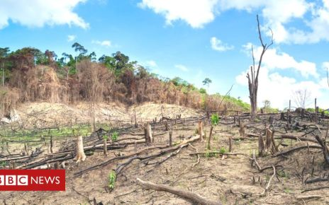 106648250 gettyimages 495339935 - Nature's emergency: Where we are in five graphics