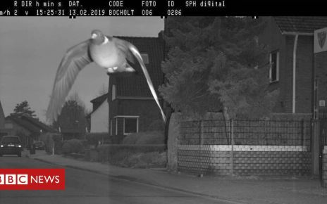 106836307 taube - German pigeon flashed by German camera goes viral