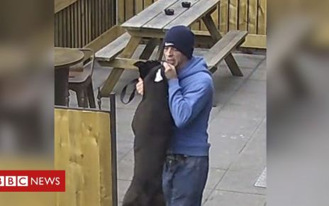 107075346 dog - Dog punched in head in Bournemouth pub garden attack