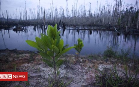 107324088 gettyimages 104717449 - Plant extinction 'bad news for all species'