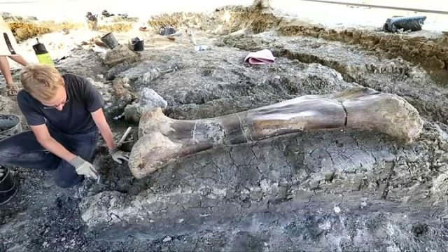 1564152289 557 Dinosaur bone Scientists uncover giant femur in France - Dinosaur bone: Scientists uncover giant femur in France