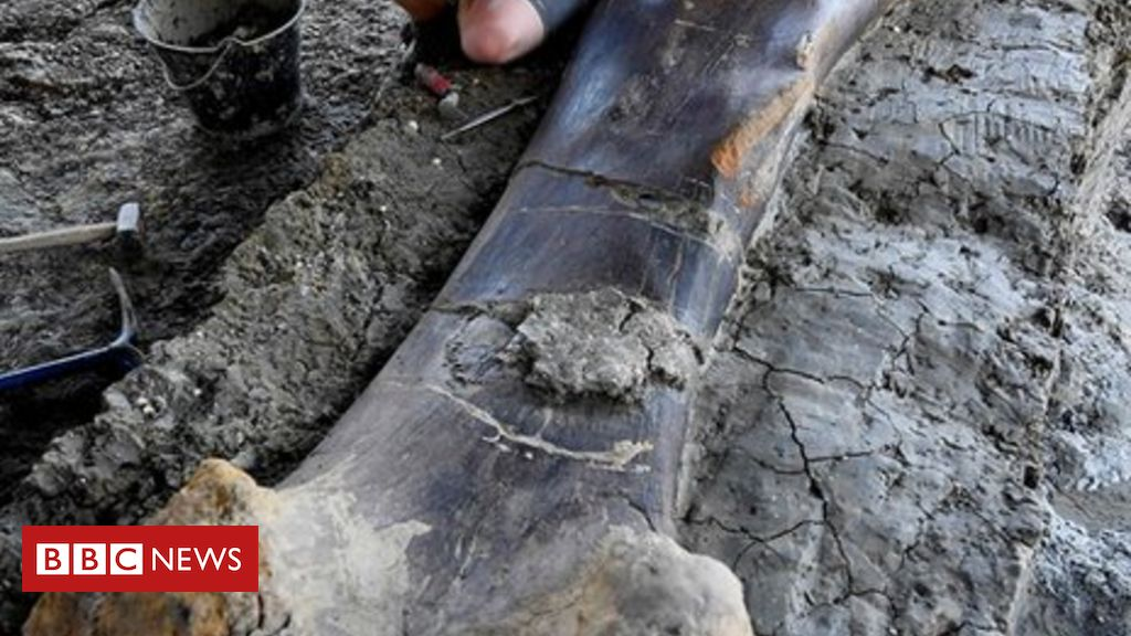 108078530 055501584 1 - Dinosaur bone: Scientists uncover giant femur in France