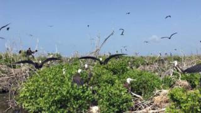Birds on Barbuda