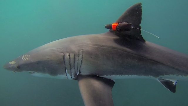 1566747548 17 Sharks and rays to be given new international protections - Sharks and rays to be given new international protections