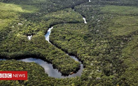 108377459 p07l3n2p - Former Farc rebels become eco-warriors to stop deforestation in the Amazon
