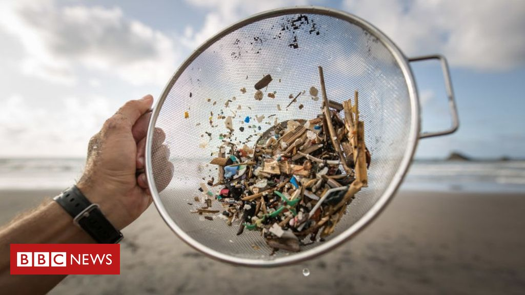 109163604 gettyimages 1000085518 - Microplastics: Seeking the 'plastic score' of the food on our plates