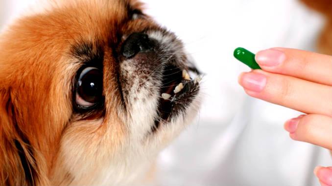 дегельминтизация собакя