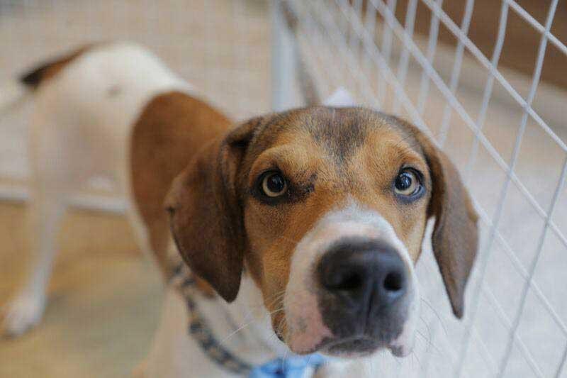 Feira de adoção de animais Pet Lovers será realizada neste domingo (20)