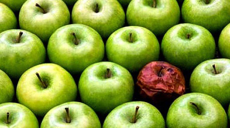 As frutas podres de cada dia